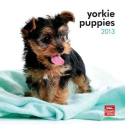 Yorkshire Terrier Puppies 2013 Calendar (Calendar)